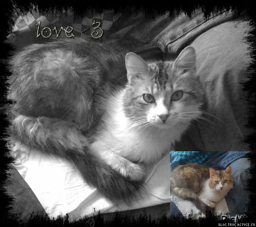 Mon chat d'amour !! [Firelove] Carame10