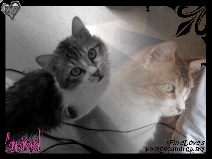 Mon chat d'amour !! [Firelove] Copie_10