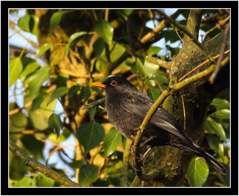 Oiseaux d'hiver 2010-2011 : Vadrouille Img_9410
