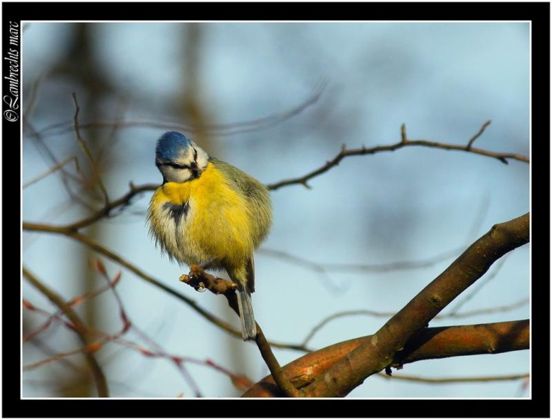 Oiseaux d'hiver 2010-2011 : Vadrouille Masang10