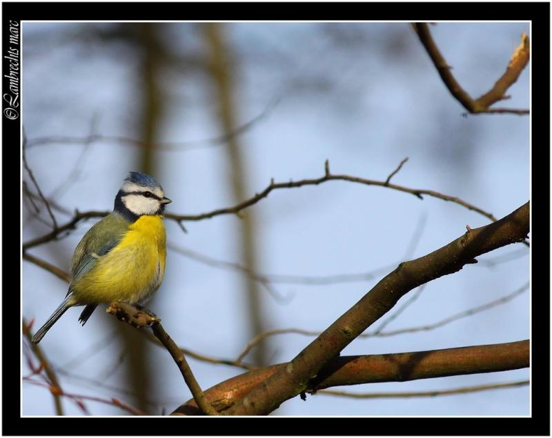 Oiseaux d'hiver 2010-2011 : Vadrouille Masang11