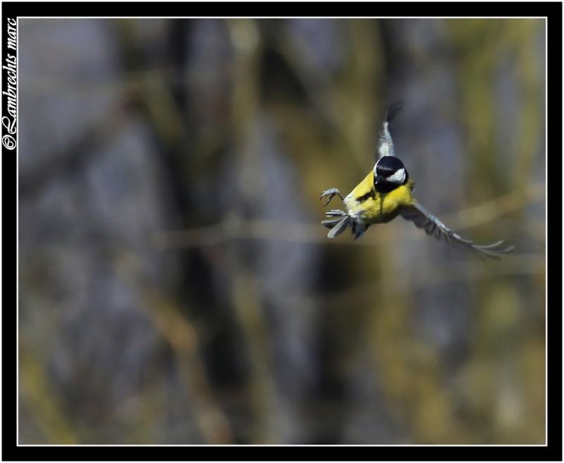 suite des oiseaux en vol Masang15