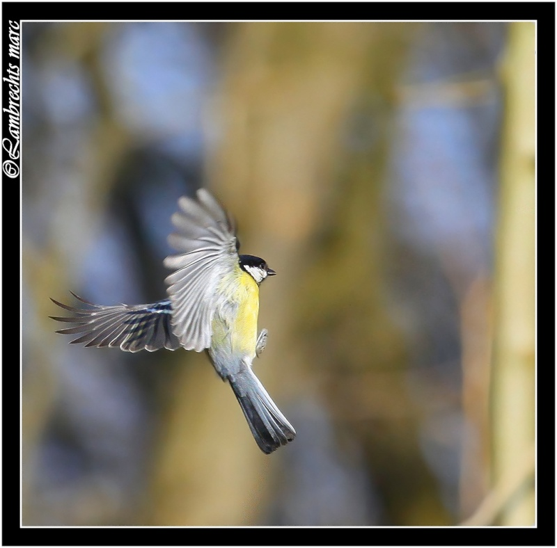 suite des oiseaux en vol Masang16