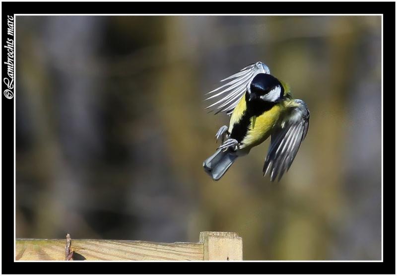 suite des oiseaux en vol Masang17