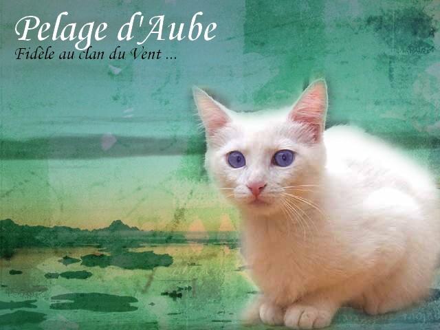 Petit blé [NON REUSSI] Aube10
