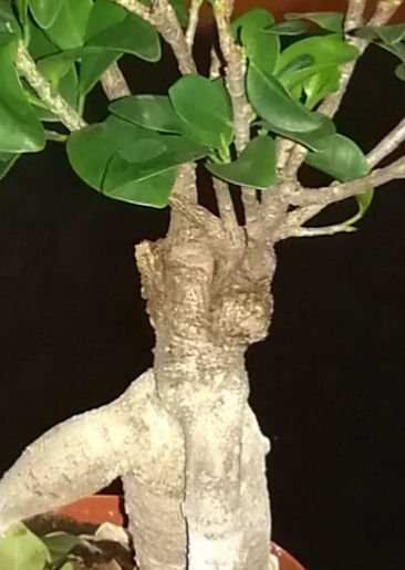 Mi primer bonsai Img_2013