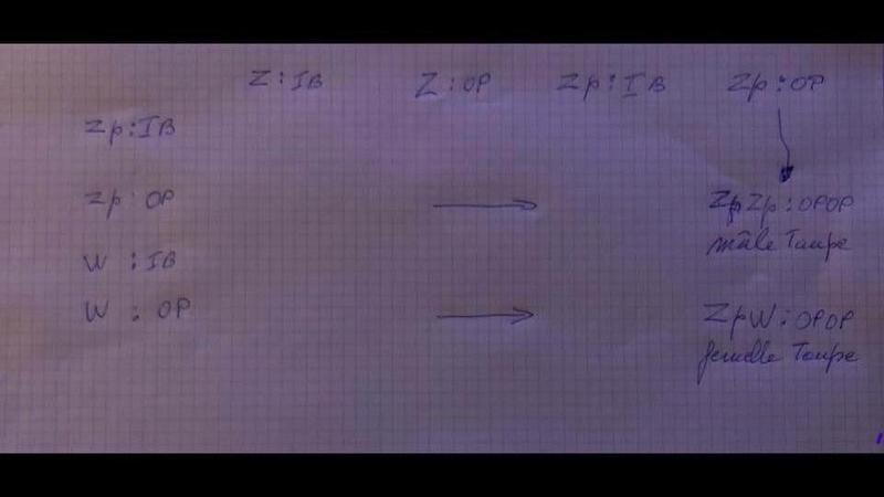 Paon Bleu : les Mutations - Page 10 A4f20a10