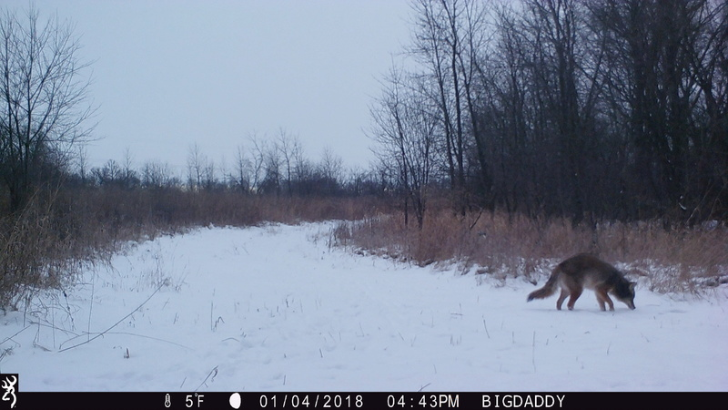 Any Coyote hunters on here?? Img_0111