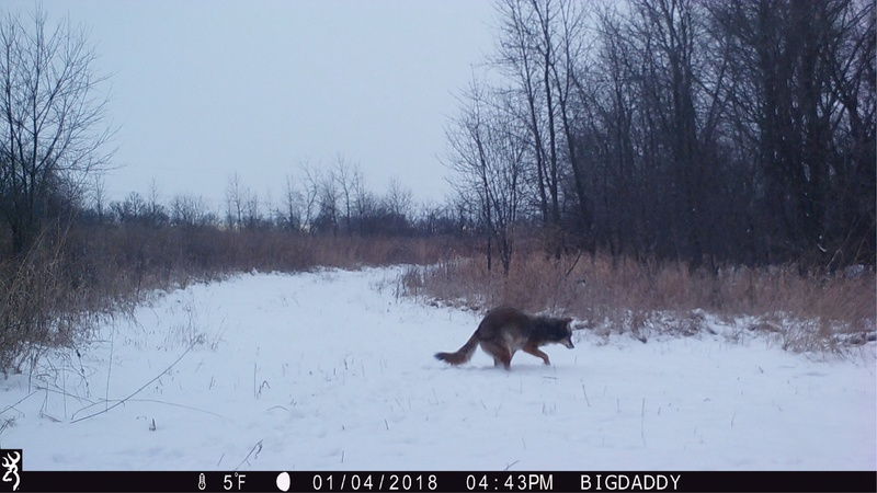 Any Coyote hunters on here?? Img_6712