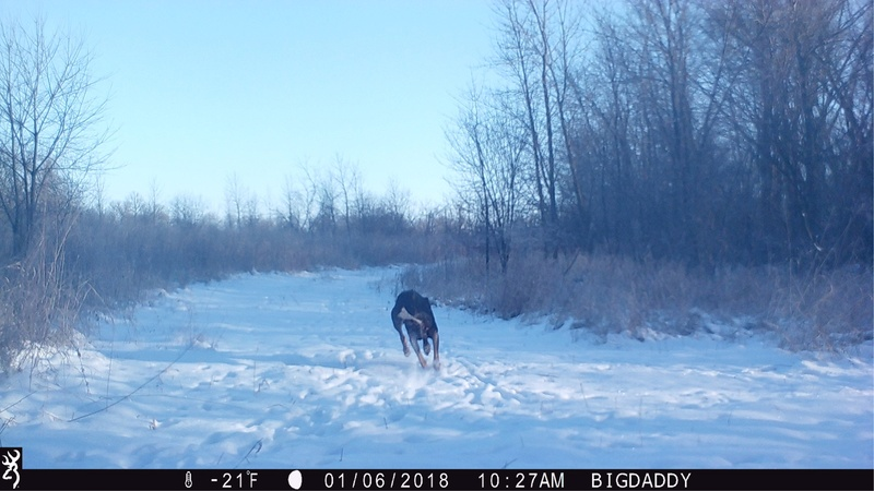 Any Coyote hunters on here?? Img_6717