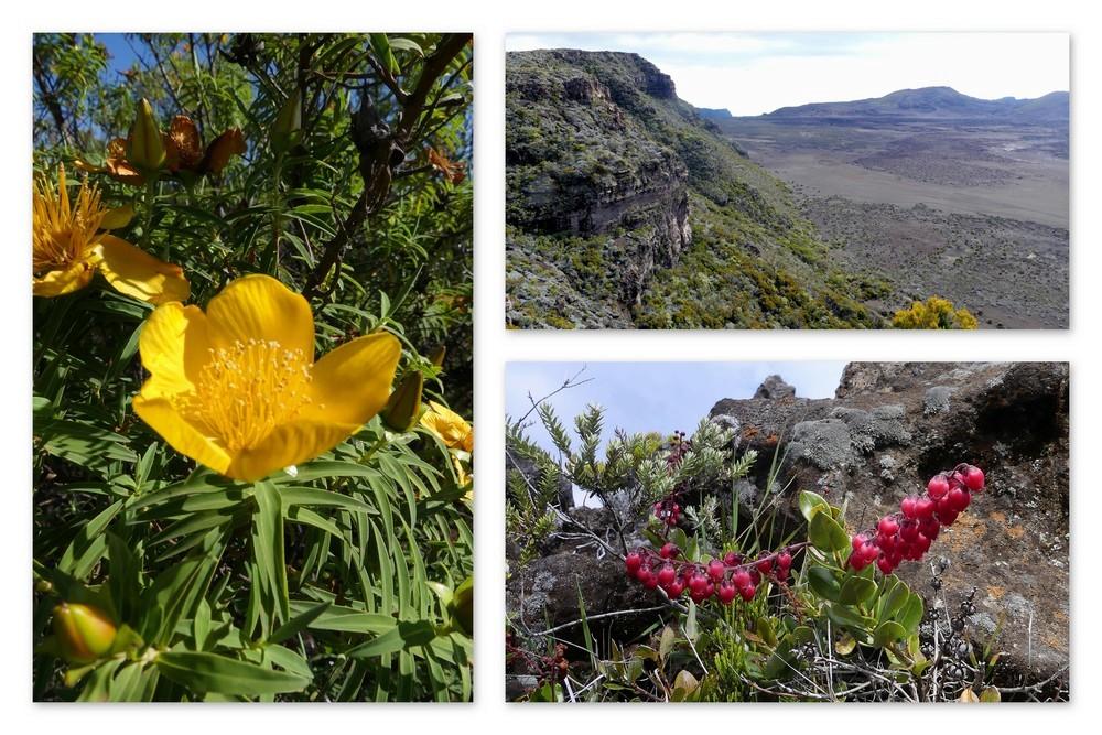 Cinquième voyage à la Réunion 26_sen10