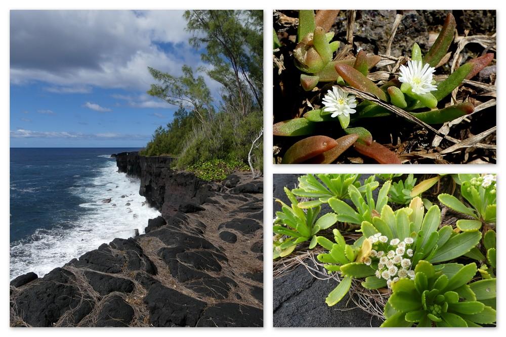Cinquième voyage à la Réunion 2_sud_10