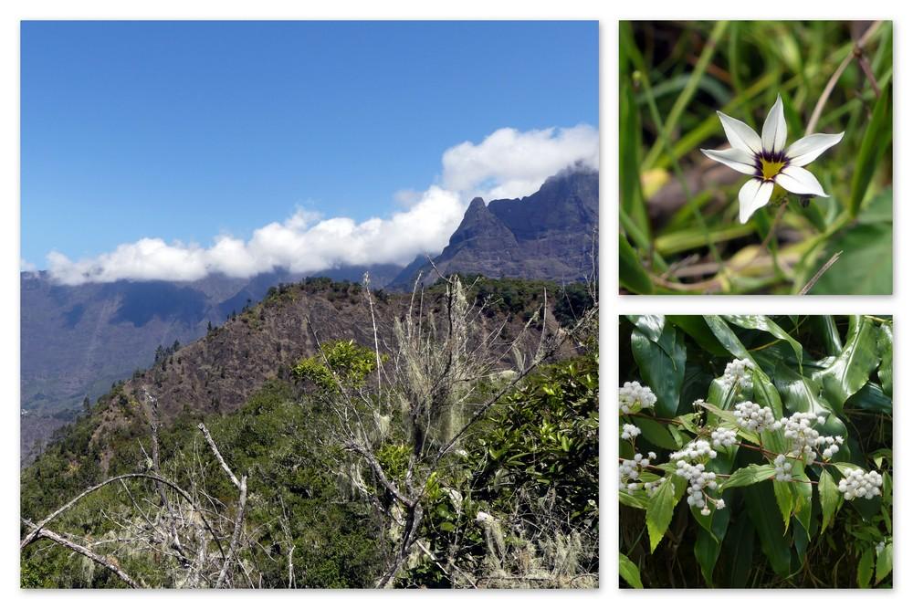 Cinquième voyage à la Réunion 33_cil10