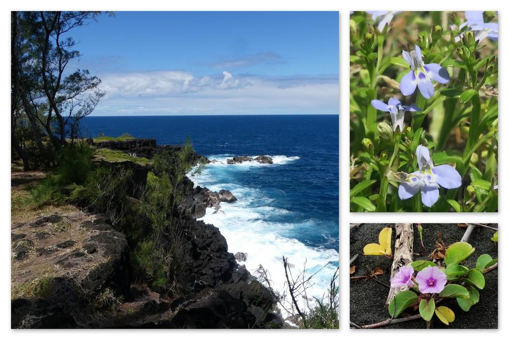 Cinquième voyage à la Réunion 3_poin10