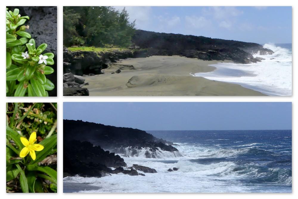 Cinquième voyage à la Réunion 4_vieu10