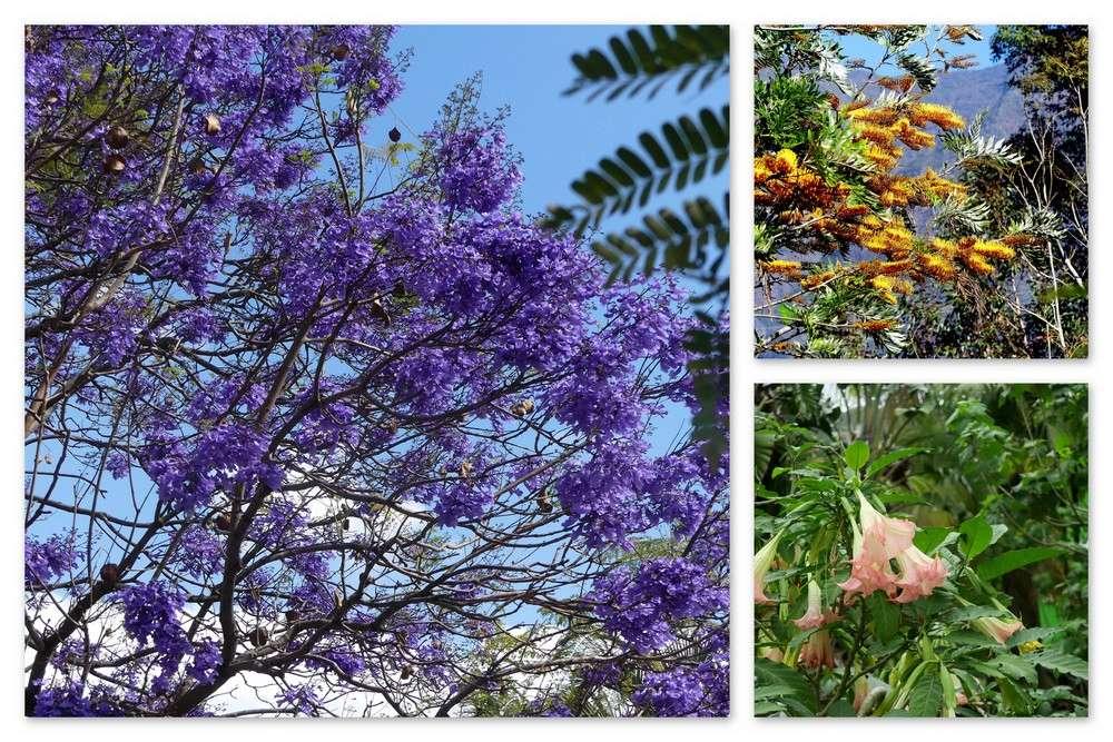 Cinquième voyage à la Réunion 54_jac10