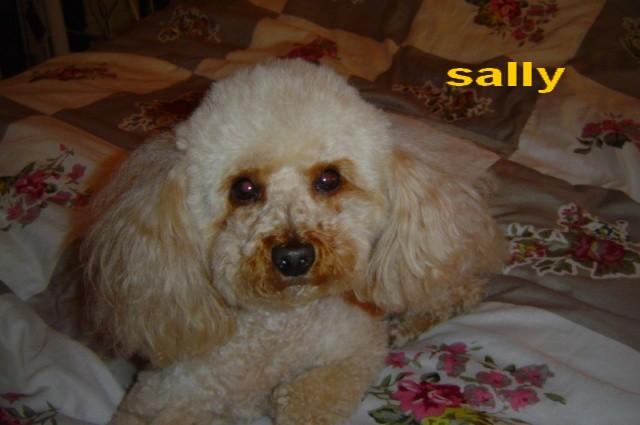sally ma canichette Dsc02815
