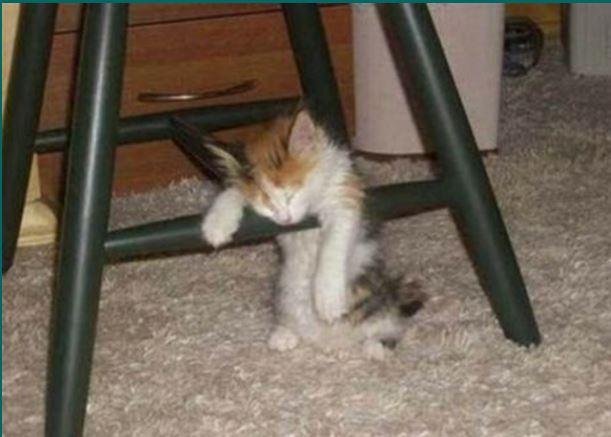 HUMOUR : le chat dans tous ses états - Page 21 Chat710