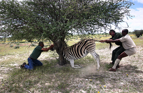 [Jeu] Association d'images - Page 2 Zebra10