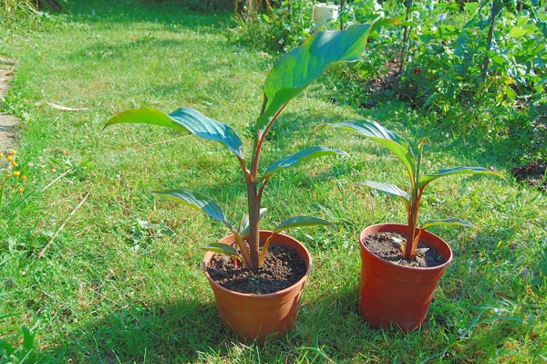 quand les échanges donnent de belles plantes  Loucan10