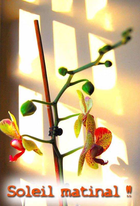 Pots à orchidées !!! Solei_10