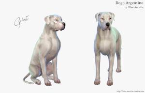 Собаки Uten_n11