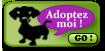 HULK rebaptisé WILLOW mâle croisé labrador de 8 mois Adopte11