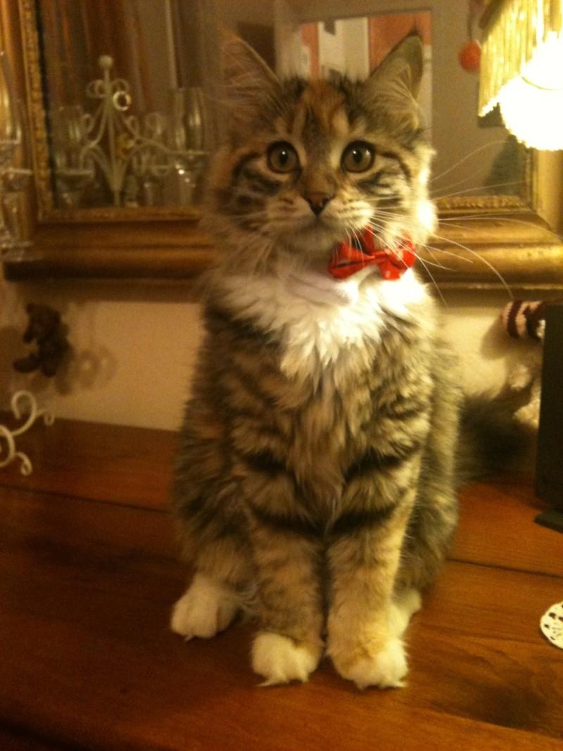 concours photo:  le chat en fête! Image12