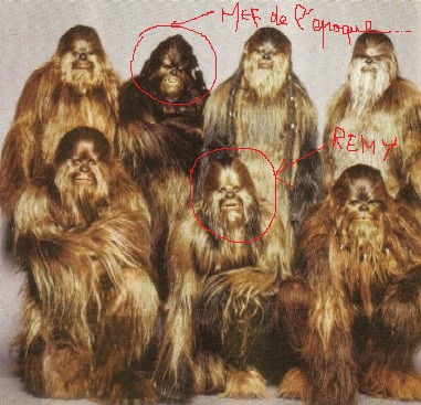 semaine Nestaremy Wookie10