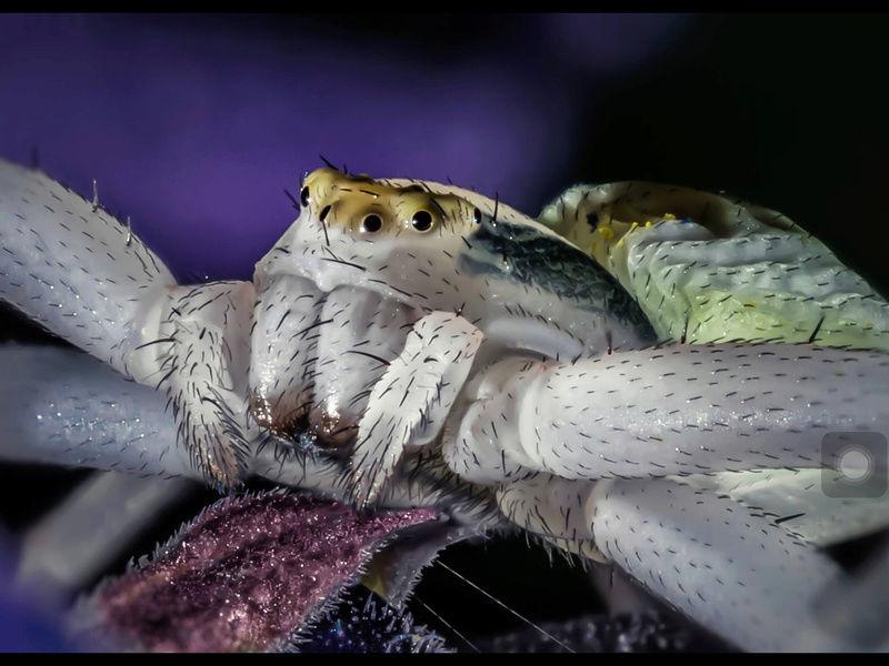 Photos et vidéos de vos animaux ! Image10