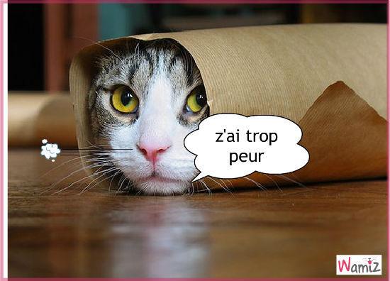 Sortie Ciné / Paris , Qui sont les chats à la cool qui seraient tenté? (no doigt quelque part inside) - Page 4 Chat-q10