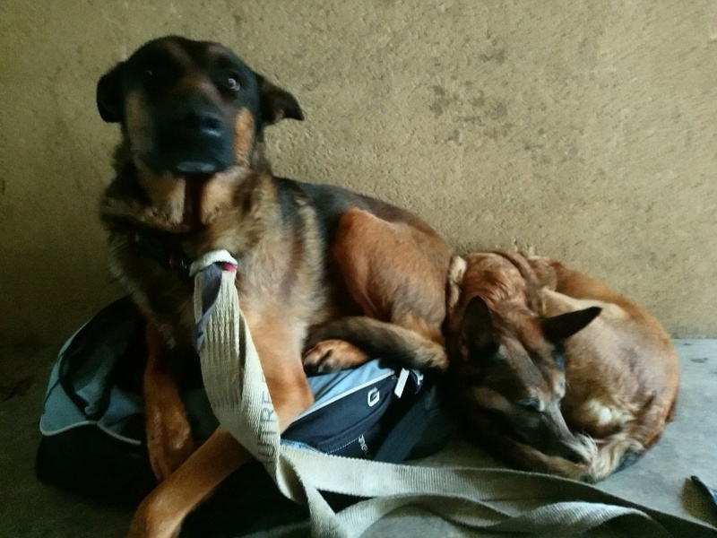 garde temporaire 2 chiens suite hospitalistaion (Dinan) Mms_im10