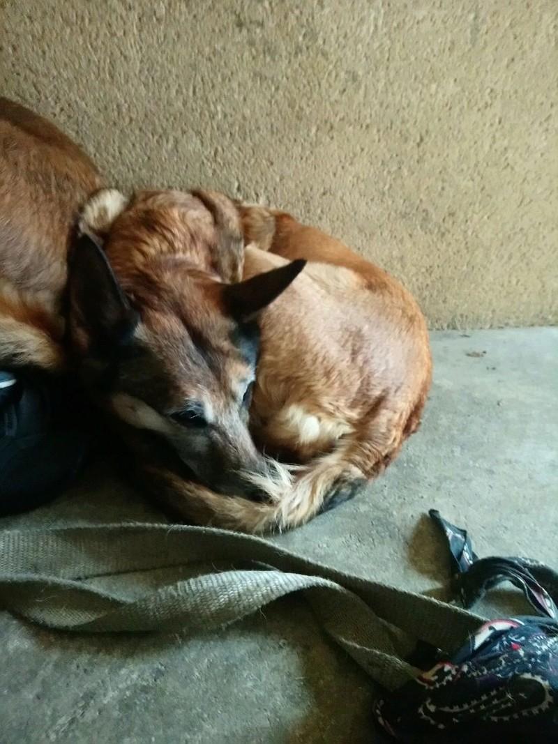 garde temporaire 2 chiens suite hospitalistaion (Dinan) Mms_im11