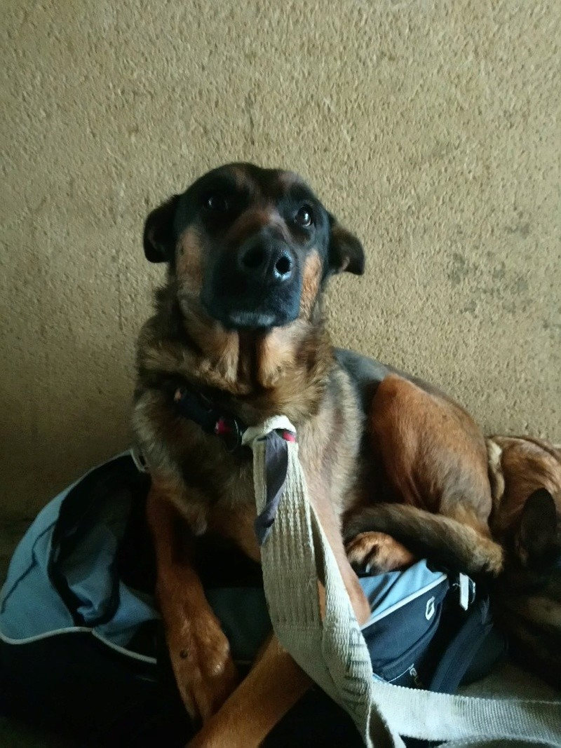 garde temporaire 2 chiens suite hospitalistaion (Dinan) Mms_im12