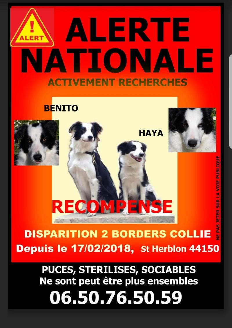 Benito  et Haya, borders, toujours introuvables depuis le 17/02/18 Screen10