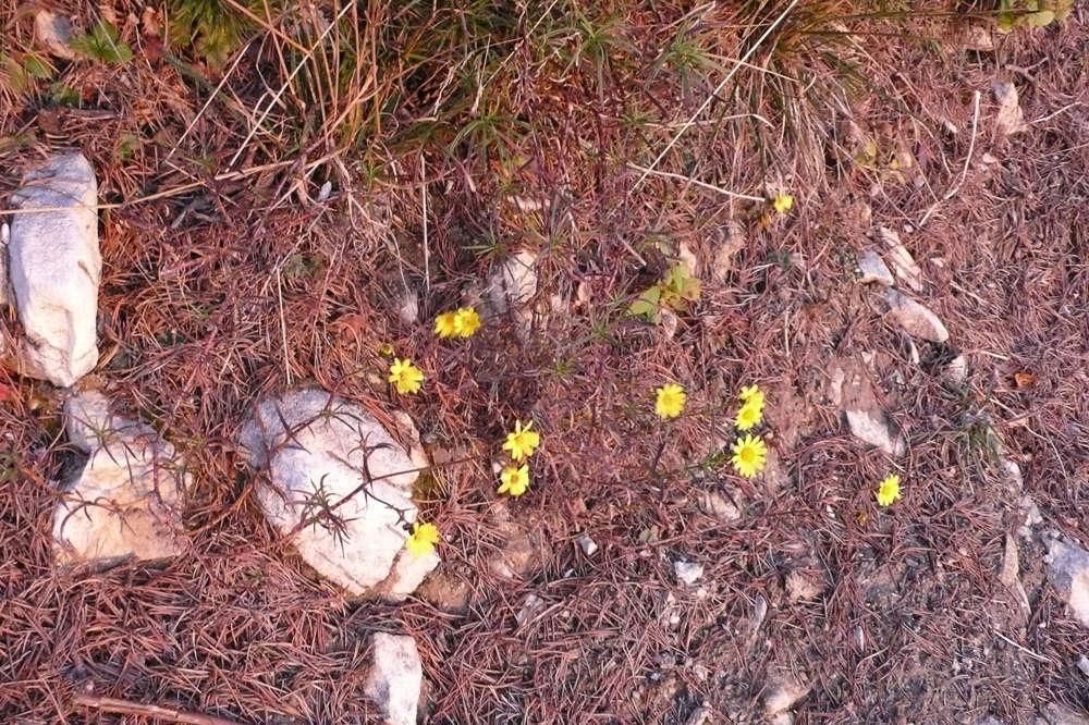 Une visite au Mont Baldo 02/11/17 1110