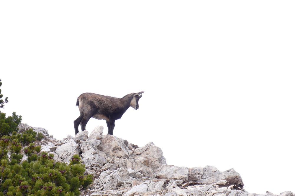 Une visite au Mont Baldo 02/11/17 710