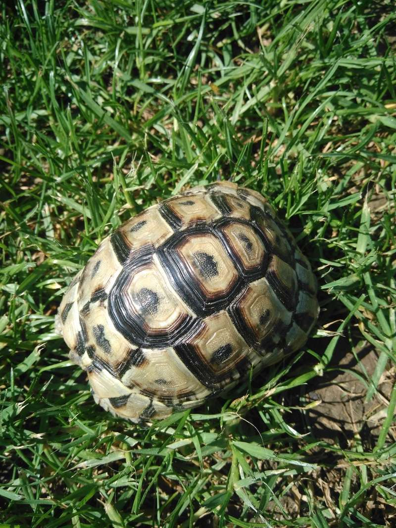 Identification Tortue race et âge Img_2015
