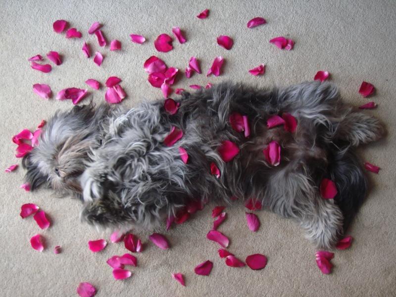 Valentine Album Valent14
