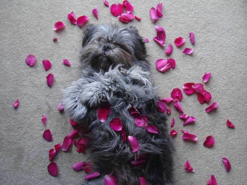 Valentine Album Valent15
