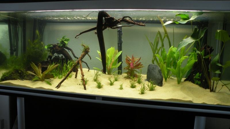 Mon nouveau aquatlantis ambience Aquari14