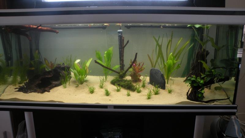 Mon nouveau aquatlantis ambience New111