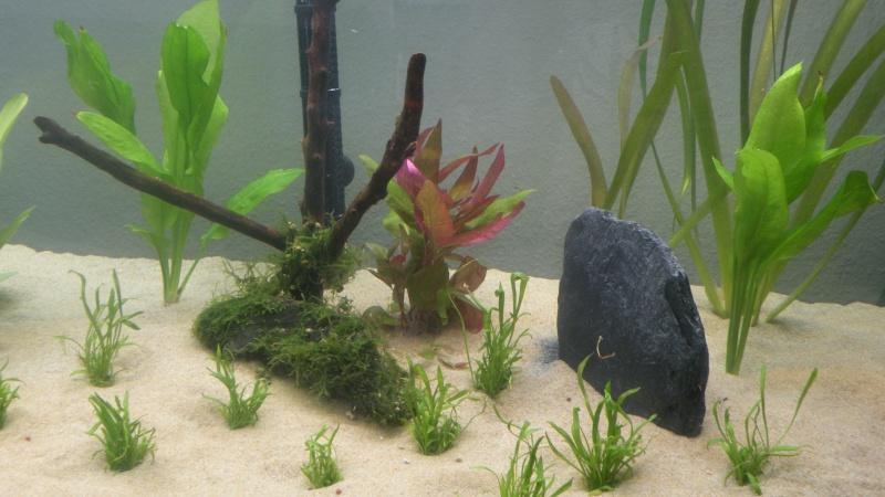 Mon nouveau aquatlantis ambience New_410