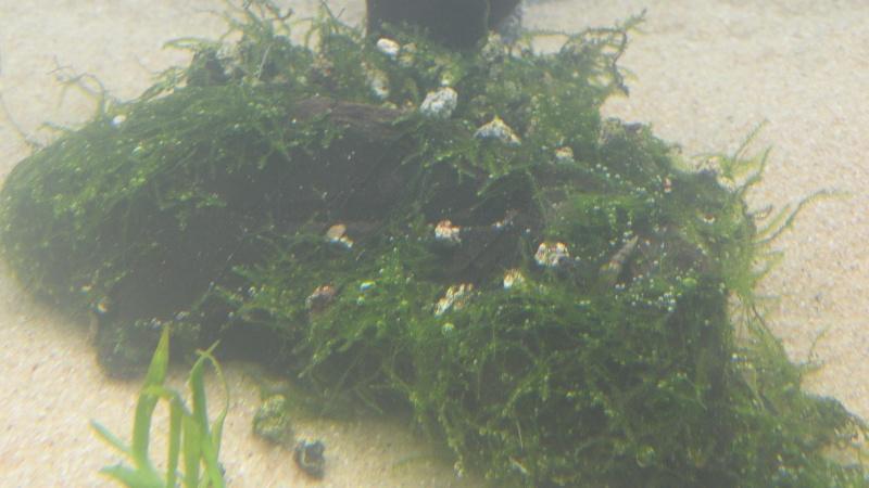 Mon nouveau aquatlantis ambience Plante13