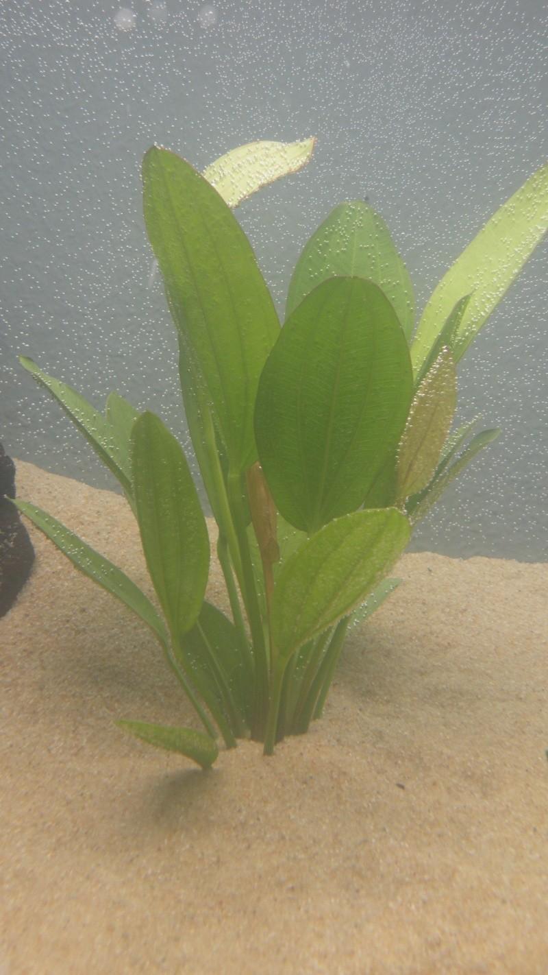 Mon nouveau aquatlantis ambience Plante14
