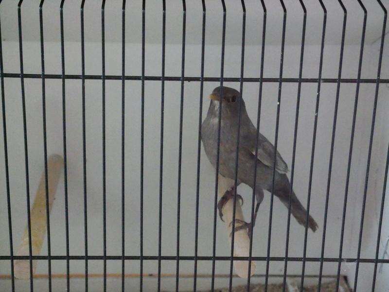 Concours Eurobird P1000416