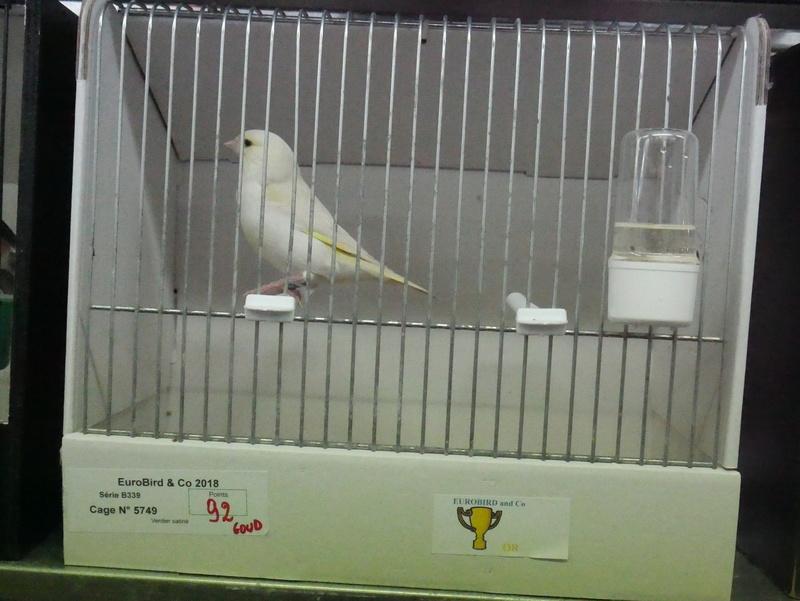 Concours Eurobird P1000417