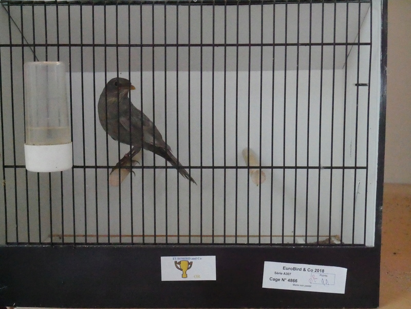 Concours Eurobird P1000517