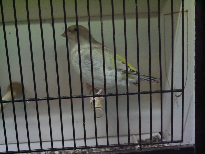 Concours Eurobird P1000716