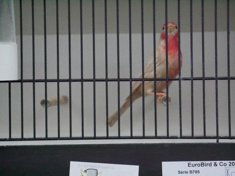 Concours Eurobird P1000724